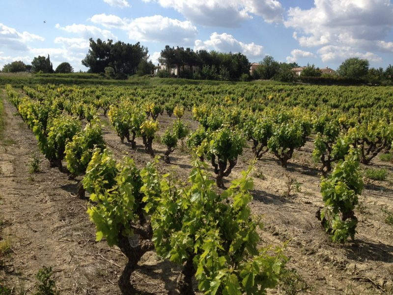 Countryside in Uzes, France