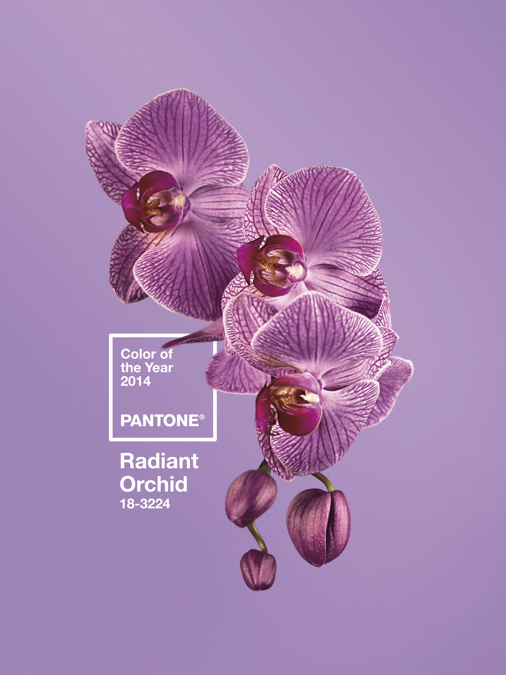 baby boomer fashions, Pantone 2014 Color of the Year, Radiant Orchid, life after 50, over 50