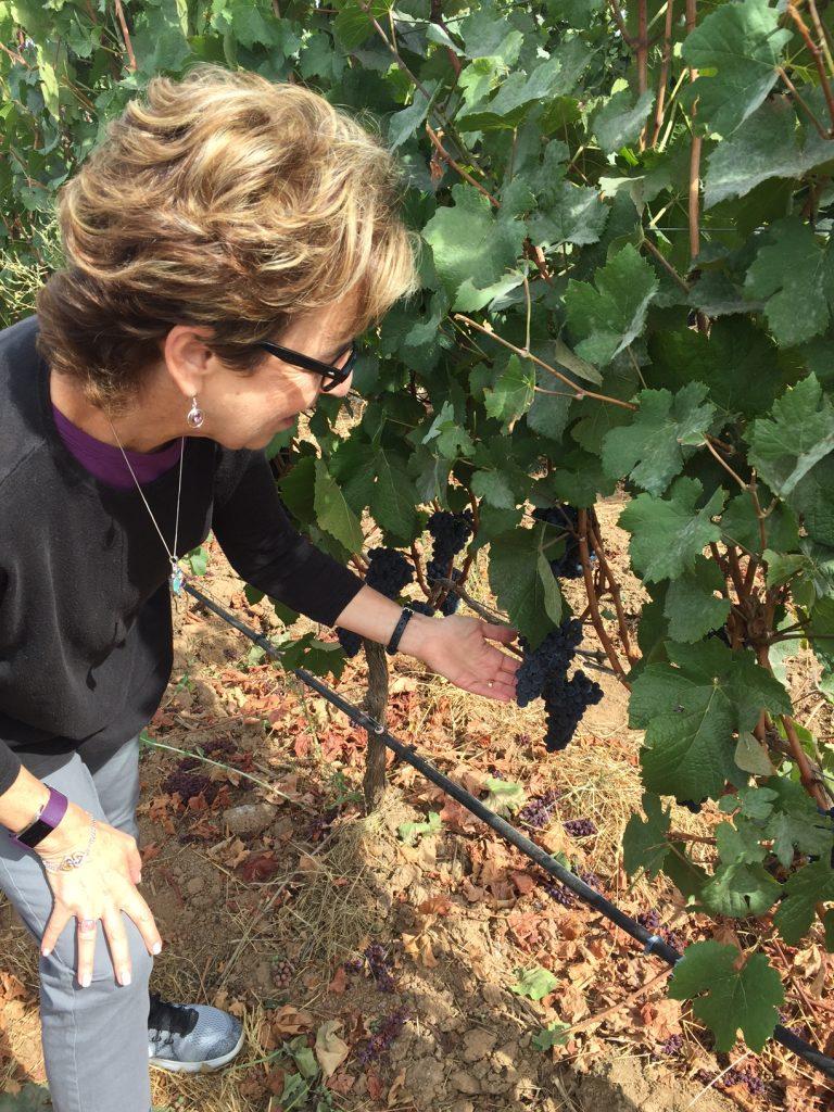 Ponzi Winery; Tualatin Valley; Oregon; boomer blogger; travel