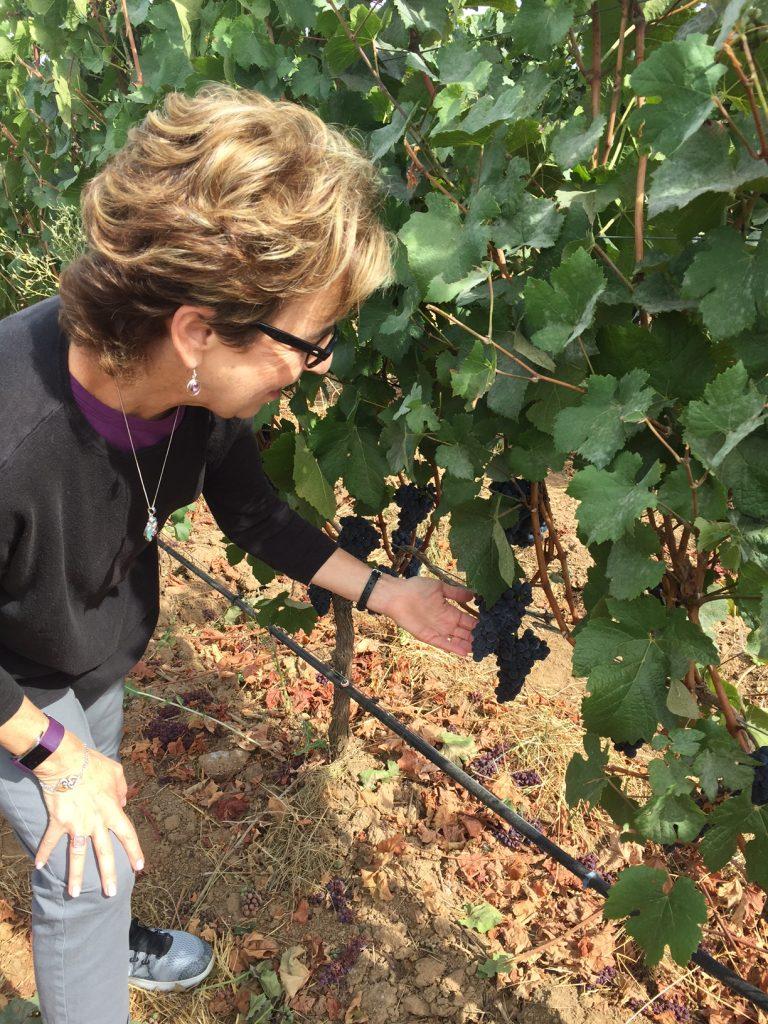Ponzi Winery; Ponzi Vineyards; The Tualatin Valley; Willamette Valley Wine Region; Oregon wines; boomer travel