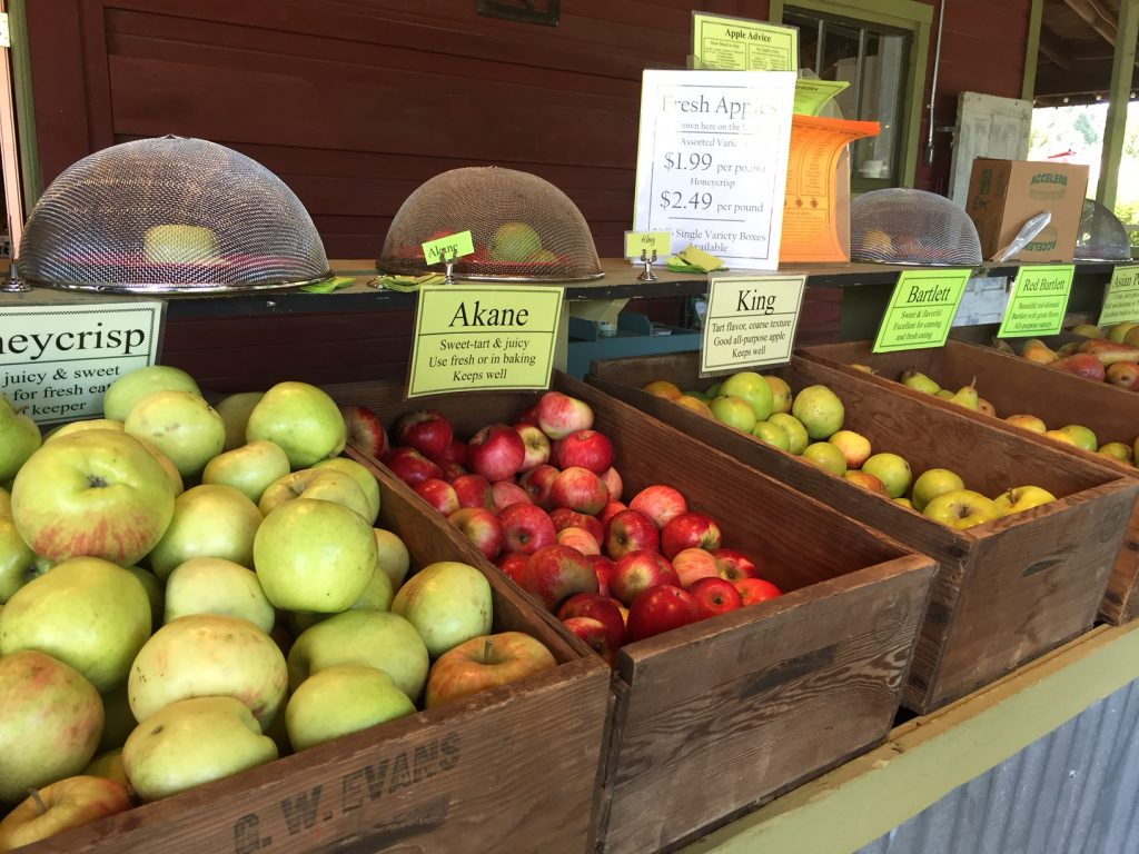 Smith Berry Barn; heirloom apples; The Tualatin Valley; boomer travel; Oregon apples; Oregon