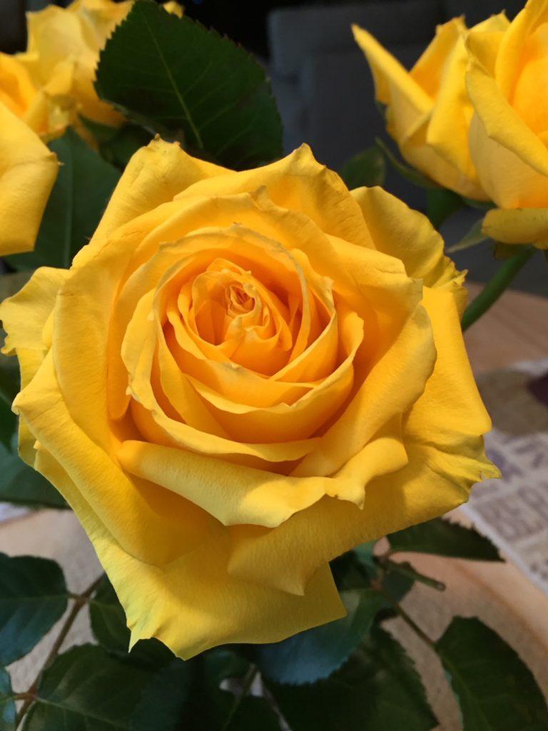 Yellow roses; happiness; boomer wellness
