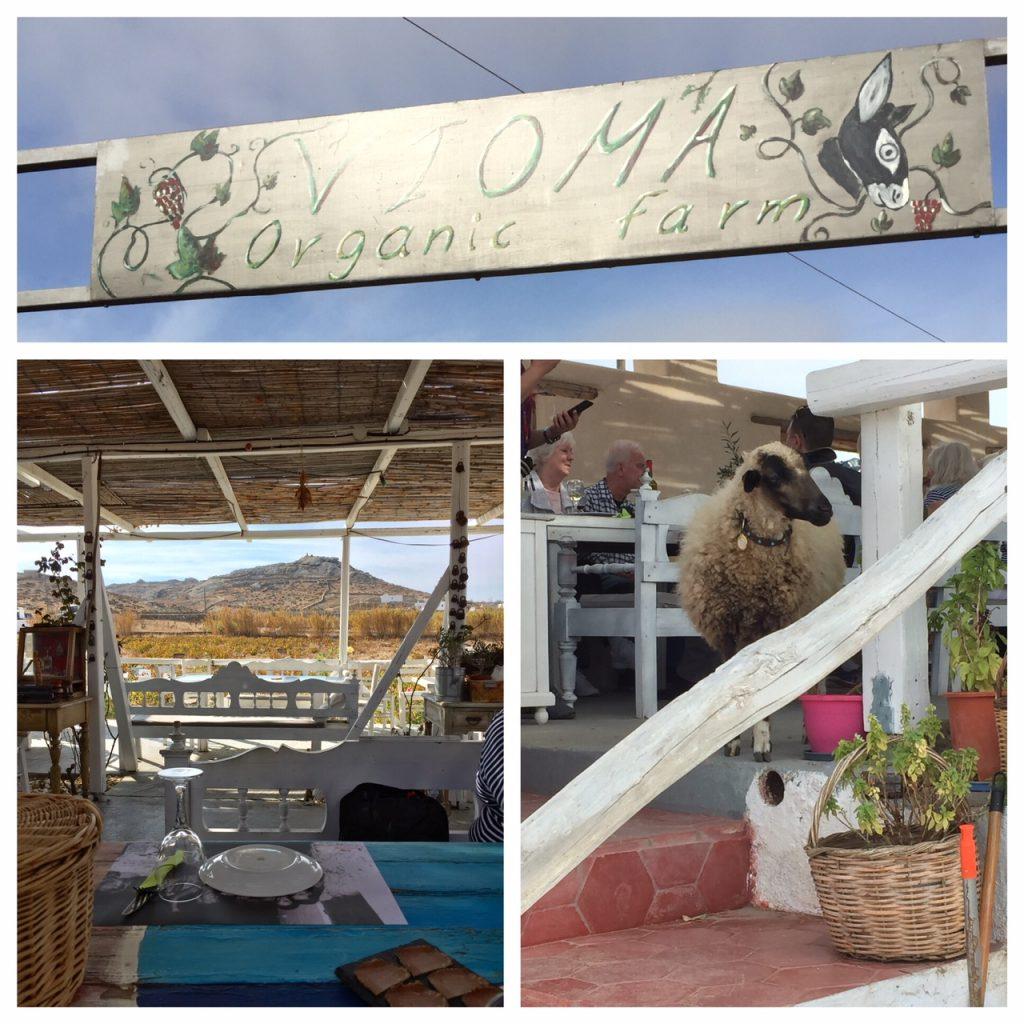 Vioma Organic Farm; Mykonos; Greece; Viking Ocean Cruise; luxury travel