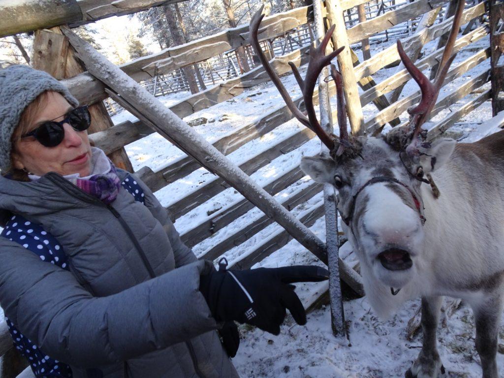Visiting reindeer in Lapland