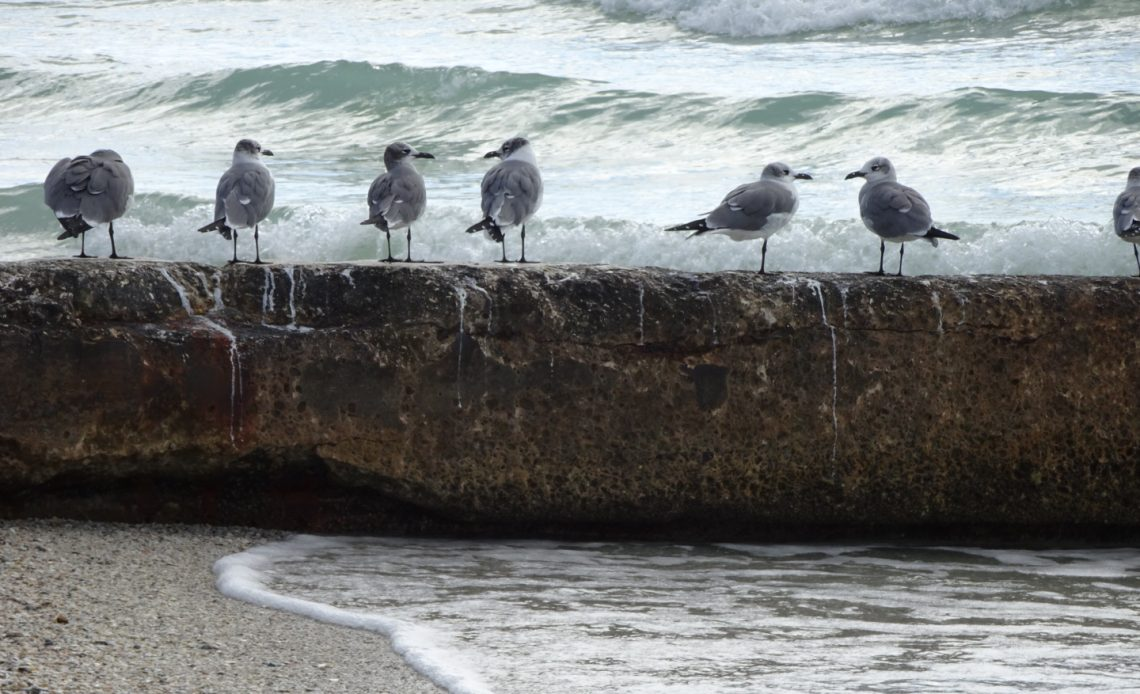Birds on Longboat Key beach