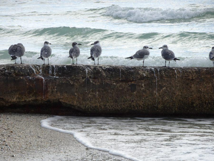 Birds on Longboat Key beach
