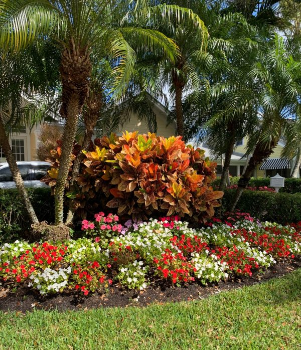Landscaping in Old Town Naples