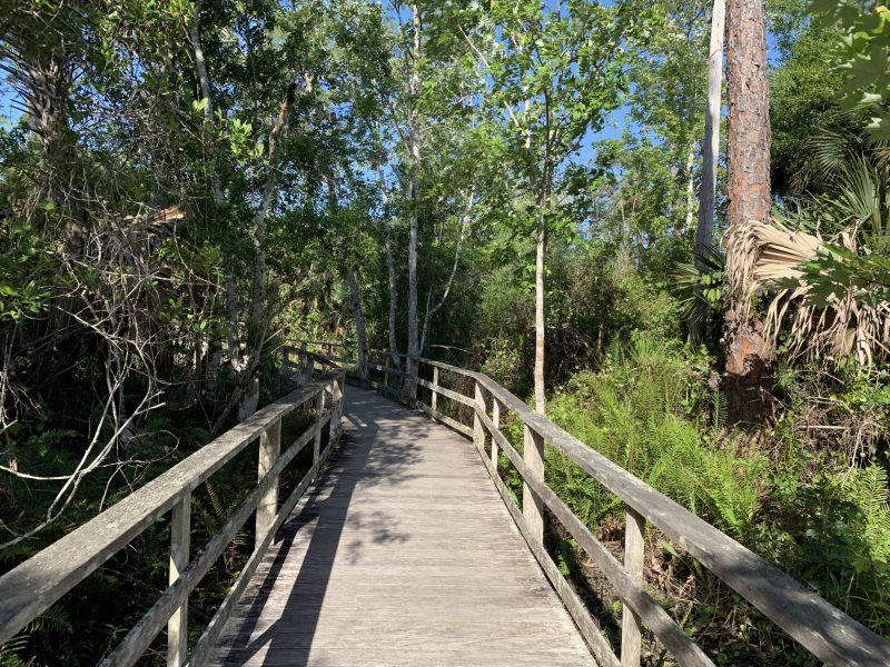 Boardwalk at Corkscrew Swamp Sanctuary