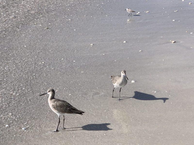 Birds on Wiggins Park Beach