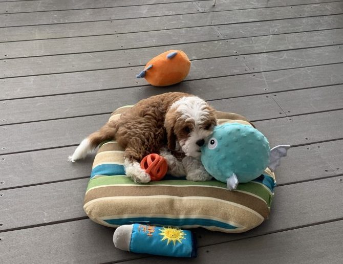 Puppy and toys